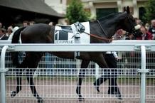 cheval_7_-_courses_c_naiade_plante